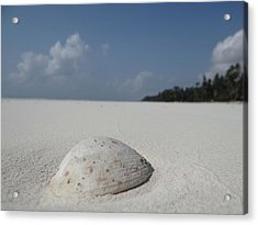 Shell In The Sand Acrylic Print