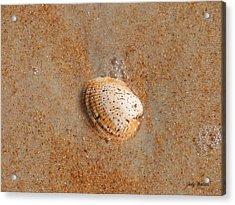 Shell Acrylic Print by Judy  Waller