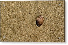 Shell On Beach Acrylic Print by Steven Ralser