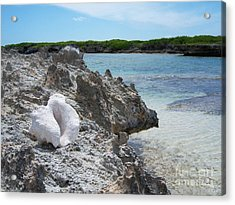 Shell On Dominican Shore Acrylic Print
