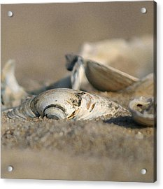 Shell Pile Acrylic Print by Mary Haber