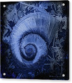 Shell Series 3 Acrylic Print by Marvin Spates