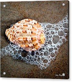 Shell Series No. 4 Acrylic Print