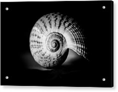 Shell Study No. 001 Acrylic Print