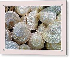 Shells - 4 Acrylic Print