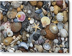 Shells And Pebbles Acrylic Print by Tim Gainey