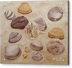 Shells And Stones Acrylic Print