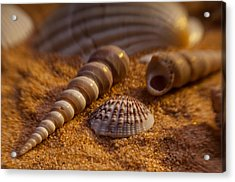 Shells Acrylic Print by Anthony Towers