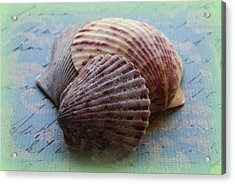 Shells Acrylic Print by Diane Reed