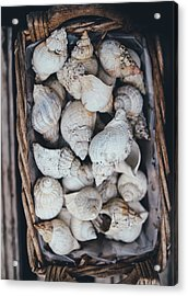 Shells Acrylic Print by Happy Home Artistry