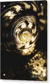 Shells In Detail Acrylic Print by Jorgo Photography - Wall Art Gallery