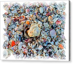 Shells Acrylic Print by Judy  Waller