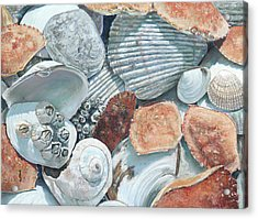 Shells Of The Puget Sound Acrylic Print