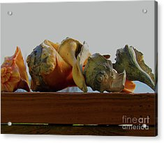 Shells Of The Sea In Orange And Gray Acrylic Print