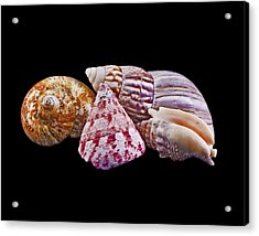 Shells On Black Acrylic Print by Bill Barber