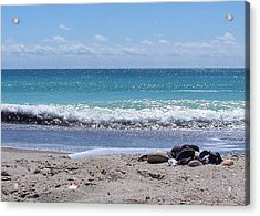 Acrylic Print featuring the photograph Shells On The Beach by Sandi OReilly