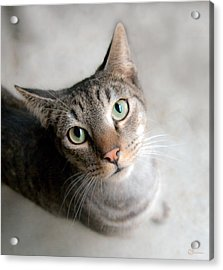 Shelter Cat Acrylic Print by Sally Mitchell