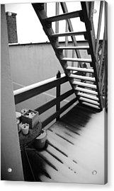 Shelter Acrylic Print by Jessica Rose