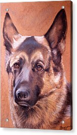 Acrylic Print featuring the pastel Shepard by Harvie Brown
