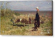 Shepherdess Acrylic Print by Anton Mauve