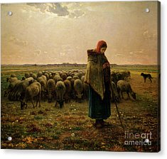Shepherdess With Her Flock Acrylic Print