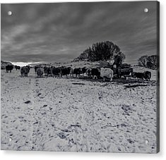 Acrylic Print featuring the photograph Shepherds Work by Keith Elliott