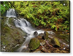 Shepperd's Dell Falls Acrylic Print by David Gn