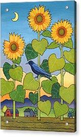 Sheris Sunflowers Acrylic Print