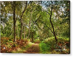 Acrylic Print featuring the photograph Sherwood Forest, England by Colin and Linda McKie