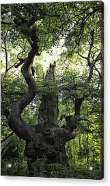Sherwood Forest Acrylic Print by Martin Newman