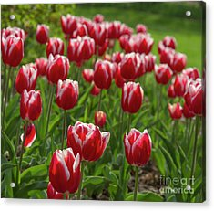 Acrylic Print featuring the photograph Sherwood Gardens 19 by Chris Scroggins