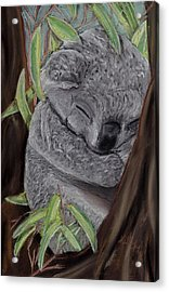 Shhhhh Koala Bear Sleeping Acrylic Print by Kelly Mills