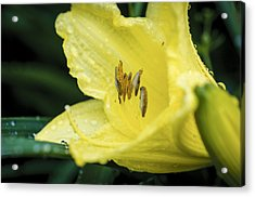Acrylic Print featuring the photograph Shielded From The Rain by Christi Kraft