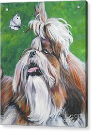 Shih Tzu And Butterfly Acrylic Print by Lee Ann Shepard