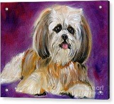 Shih-tzu Puppy Acrylic Print by Jenny Lee