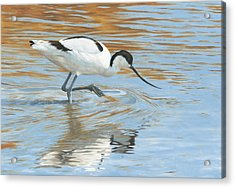 Shimmer Acrylic Print by Clive Meredith