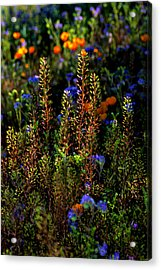 Shimmers Acrylic Print