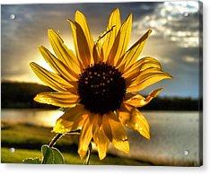 Shine Down Acrylic Print by Karen M Scovill