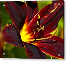 Acrylic Print featuring the photograph Shine From Within by Ben Upham III