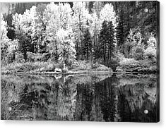 Shining Trees Acrylic Print