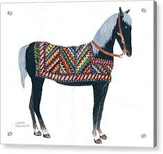 Shirvan Pony Acrylic Print
