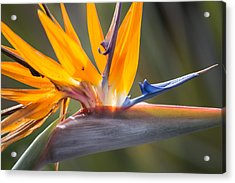 Acrylic Print featuring the photograph Shocktop by Julie Andel
