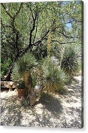 Shooting Up Cactus Garden Acrylic Print