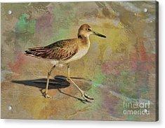Acrylic Print featuring the painting Shore Bird Beauty by Deborah Benoit