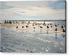 Shorebird Convention Acrylic Print