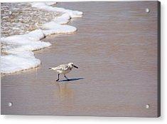 Shorebird Acrylic Print by Ty Nichols