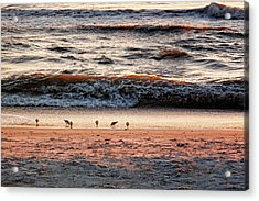 Acrylic Print featuring the photograph Shorebirds by Lars Lentz