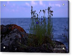 Shoreline Beauties Acrylic Print by The Stone Age