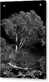 Shoreline Tree Acrylic Print