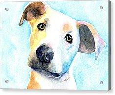 Short Hair White And Brown Dog Acrylic Print